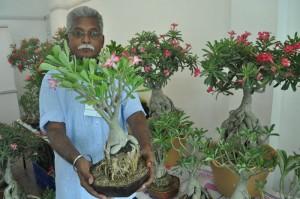 bonsai exotica exhibition at cp art centre, jalandar reddy at  second main rd, seethammal colony .ct-9677110022, www.adeniumsindia.com