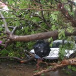 Fallen tree damages car, autos in San Thome