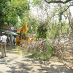 Tree comes down on V. K. Road, Mandaveli
