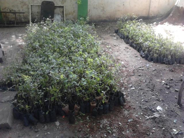 MT NOCHI PLANTS