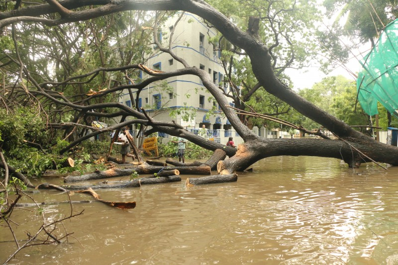 Tree down - r. a puram 2nd cross street
