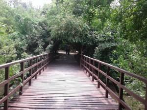 MT POONGA BRIDGE