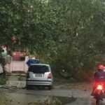 Cyclone Vardah; Tree falls and power down in several areas in Mylapore