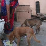 This lady feeds stray dogs daily