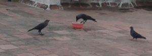 Birds on a terrace