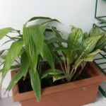 Summer gardening: indoor plants and care of terrace gardens