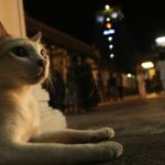 Cats at centre of controversy at Sri Kapali Temple