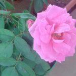 Scattered rains help flowers bloom in the neighbourhood