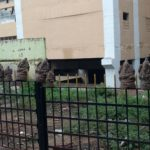 Day after Vinayaka Chathurthi, idols adorn railings