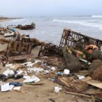 100 tons of waste cleared from seashore after immersion of images of Vinayaka