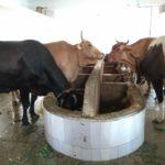 You can donate to goshala at Sri Kapali Temple