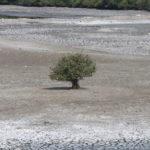 Effect of summer showing at Adyar Poonga waterbody