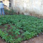 Corporation' s ward 124 office grows a mini garden near its compost yard