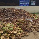 GCC uses recycled tender coconut waste from MRC Nagar as water retainer at public parks