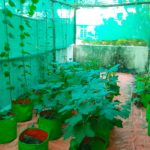Team of Chennai Corporation's ward 119 grows rooftop garden
