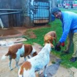 This man feeds stray dogs at Marina