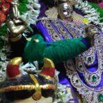 Navarathri: goddess on oonjal, women who enjoy sharing home-made sundal and fish tank adds to kolu