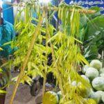 Hawkers ready for Ayudha pooja sales at South Mada Street