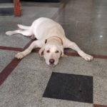 Happy ending to pet dog who stepped out to look around its Alwarpet neighbourhood