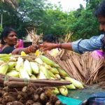 Monsoon special: corn and panam kilangu sells fast in Mylapore