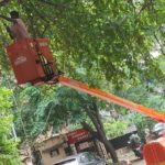 Corporation and RAPRA get together to prune avenue trees