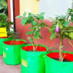 Organic vegetable plants available for sale at Spirit of Earth store