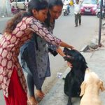 Friendly dogs at Mada Streets
