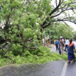 TANGEDCO official says winds and heavy rains caused power outage at Alwarpet yesterday