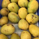 Organic Banganapalle mangoes have arrived at The Shandy store in Luz
