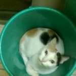 Living with many cats. Helen Christina has adjusted to lockdown and hopes people will adopt cats.