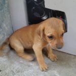 Two pups await adoption . . .