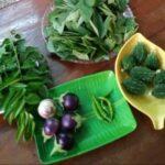 Varieties of organickeerai. Kalavathy has grown them this season.