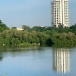 Adyar Poonga, a birdwatchers delight even from its fringes