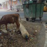 Empty gas cylinder dumped near garbage bin