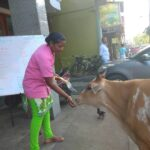 Despite being short staffed and running on low business, Ratna Cafe in Mylapore contines its service of feeding cattle