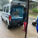 NGO rescues dozens of stray dogs during cyclone Nivar