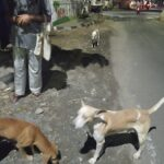 Stray dog supporters seek funds to sterilise the animals