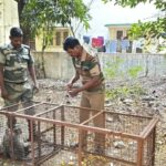 Some monkeys who bothered Alwarpet residents trapped