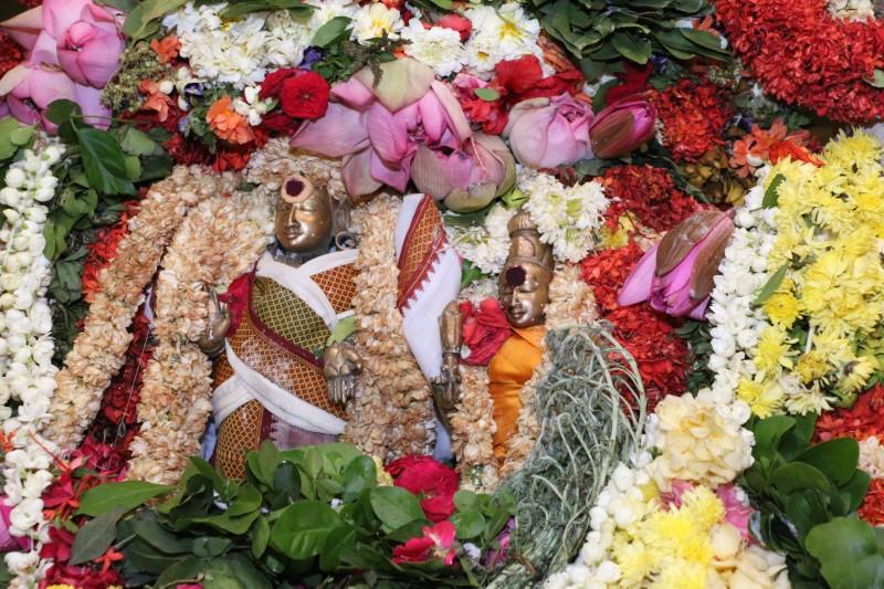 Sri Kapali Temple - Maha sivarathri