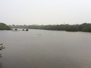 MT POONGA RAIN