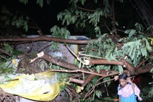 MT TREE DOWN