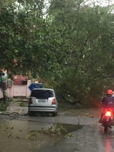 tree-down-at-madha-church-road