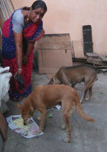 dog feeder