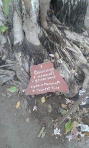 Tree at CPR road